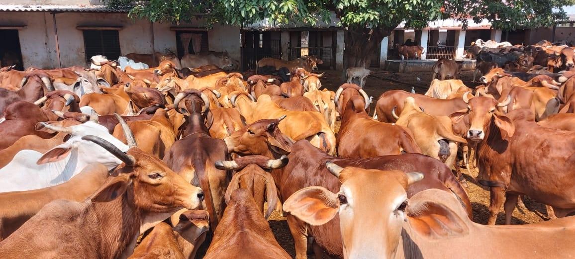 यूपी में मार्च 2021 तक 5.2 करोड़ पशुओं की होगी जिओ टैगिग
