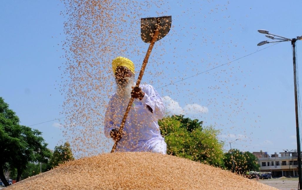खाद्यान्नों के सार्वजनिक वितरण के लिए एमएसपी पर खरीद जरूरी : सरकार