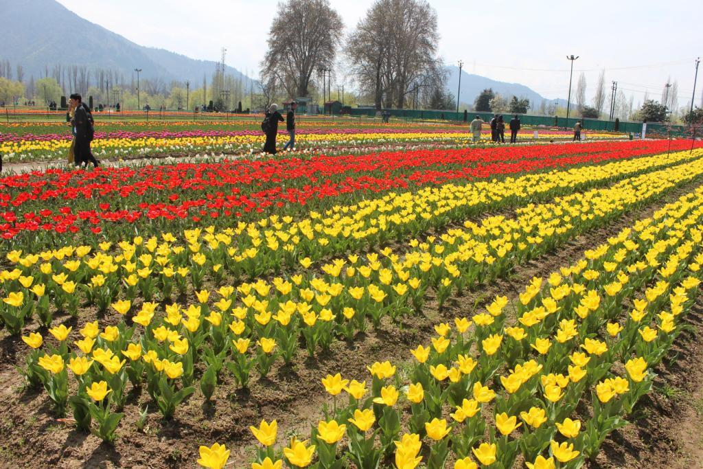 कश्मीर में पर्यटकों के आगमन से आतिथ्य उद्योग चमका, स्थानीय अर्थव्यवस्था को मिलेगा फायदा
