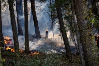 दक्षिणी कैलिफोर्निया में जंगल की आग भड़की, लोगों को सुरक्षित जगहों पर जाने के आदेश
