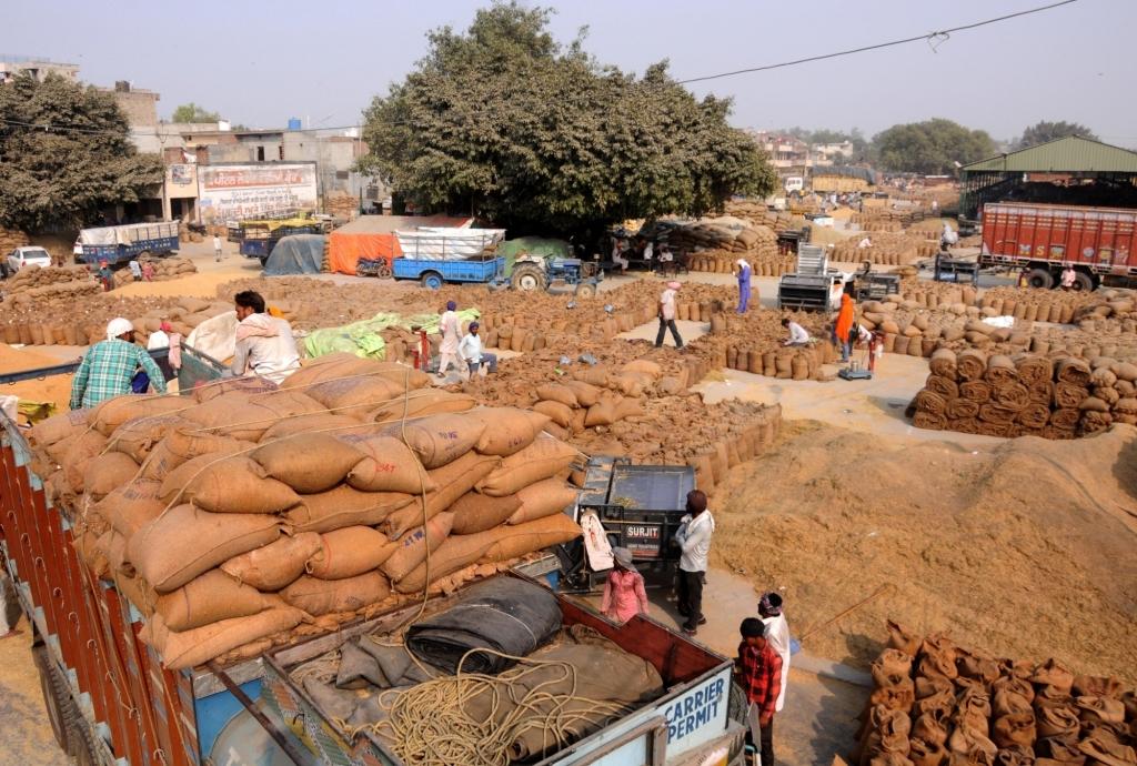 बिहार में 3 चरणों में होगी धान की खरीदी, 1 नवंबर से होगी शुरुआत